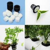 La pianta idroponica dell'aeropronio del vaso nero della maglia di plastica coltiva il clone del fiore del giardino della rete