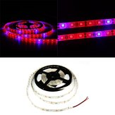1M 2M 3M 4M 5M 3: 1 5050 SMD LED Plante hydroponique imperméable à l'eau Cultive Strip Light DC12V