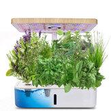 Hydroponics Growing System Indoor Kräutergarten Pflanzer Starter Satz mit Grow Light LED Höhenverstellbarer Smart Home Garden mit automatischem Timer für verschiedene Pflanzen