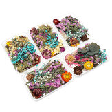 1 Box Real Dried Flower Plants Aromatherapy Candle Soap Flower Epoxy Resin Pendant Necklace Jewelry Making Craft DIY Accessories