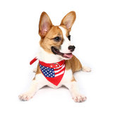 Yani HG-PLJ1 Pet Cachorro Colar de bandeira americana Pet PU Canvas Decorative Cool Collar