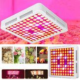AC85-265V 300 W 2 Çeşit Spektrum LED Büyümek Işık Soğutucu Fan Lamba Kapalı Topraksız için Büyüyen Bitki