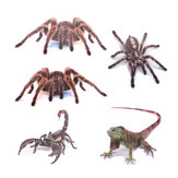 Spider lizard 3D Animal Emulation Truck Trailer Room Window Door Car Stickers Decals
