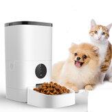 6L Pet Feeder Wifi remoto Controlla l'alimentazione automatica intelligente con ricaricabile