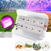 50W 100W COB a spettro completo LED Grow Light Veg Plant Flower Flood lampada per uso interno AC220V