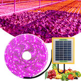 Solar Plant Lamp Strip 5V Full Spectrum LED Plant Phyto Growth lamp For Greenhouse Hydroponic Plant