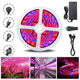 5M R:B 4:1 Waterproof 5050SMD 300 Full Spectrum Grow LED Strip Lights kit For Plant Veg DC12V