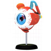 4D MASTER STEM 126mm Eye Model Assembly Human Anatomy Medical Model DIY 3D Structure Of The Eye Puzzle