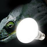 E27 25W 40W 60W 75W 100W UVA Лампочка Рептилия Pet Terrarium Brooder Нагреватель Лампа AC220-240V