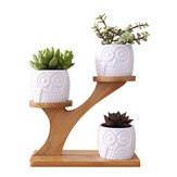 3Pcs Owl Succulent Pot Ceramic Garden Flower Planter Holder Bamboo Stand Sets