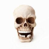 Cabeça do crânio Única Gancho Montada em Esqueleto de Resina Ganchos