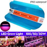 30W 50W 100W Espectro completo COB LED Planta Cresce a luz crescente lâmpada hidropônica Veg flor AC220V