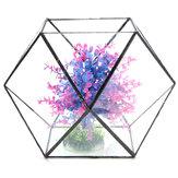 Vetro poligono serra terrario fai da te micro paesaggio piante grasse vaso di fiori