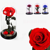 Forever Rose Beauty & The Beast Imortal Flower Fresh Christmas Presentes Originais Decorações