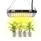 800W Full Spectrum LED Plants Growing Light 3500K/5500K Color Temperature 50 LED Light Beads IP66 Waterproof for Greenhouse Indoor Bonsai Planting