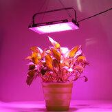 50W 100W LED növekvő fény teljes spektrumú üvegházi beltéri növényi zöldségtermesztő lámpa