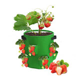 2Pcs 10 Gallon Strawberry Planter Bags Grow Bag Garden Pots Non Woven Fabric