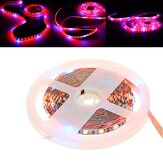5M SMD5050 Red:Blue 3:1 4:1 5:1 Waterproof LED Strip Grow Plant Light DC12V for Vegetable