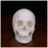 Humano Cráneo Decoración hecha a mano Goth Decoración de Halloween Recuerdos de regalo Ornamento