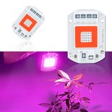 AC110V / AC220V 20W 30W 50W Full Spectrum Rosso e Blu LED Grow Light Chip per Piante da Interno Fiori