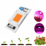 LUSTREON 50W Non-drive Thunder Protection COB LED Chip for DIY Grow Light Plant Lamp AC180-300V