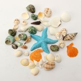 KiWarm 1 Set Mediterranean Style DIY Fashion Beach Mixed Seashells Mix Sea Shells Natural Crafts for Aquarium Fish Tank Decor