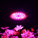LED Birne Grow Light E27 60W 2835 SMD Vollspektrum Pflanze Hydroponic Aquarium AC85-265V