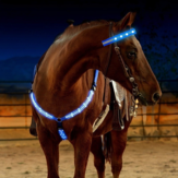 LED Outdoor Horse Chest Cintura Horse Gear Forniture equestri