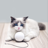HomeRun Smart Interactive Pet Toys Automatic 360 Degree Self Rotating Ball Toys with Bell Built-In Spinning Eye-Protection LED Cat Toy From Eco-system