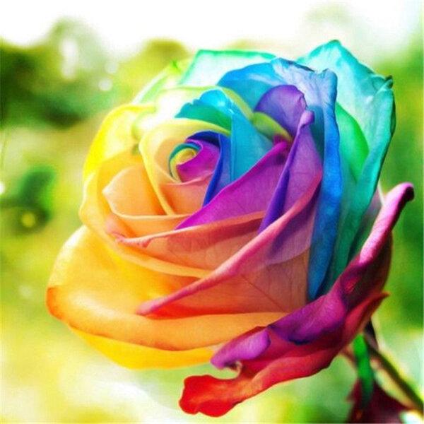 Egrow 200 Sztuk Rainbow Rose Nasiona Rzadkie Colorful Kwiat Doniczkowe Roślin Ogród Bonsai