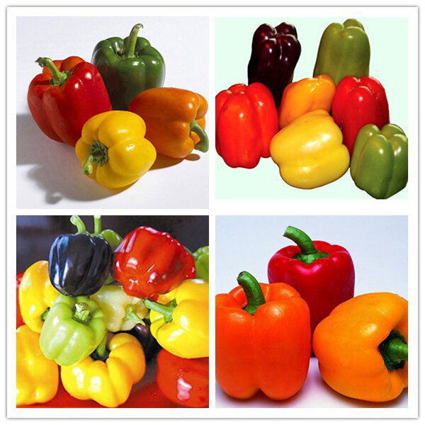 Egrow 50Pcs/Bag Mixed Red Yellow Green Pepper Seeds Colorful Sweet Pepper SeedsYellow Purple Red Green White Orange Bl фото