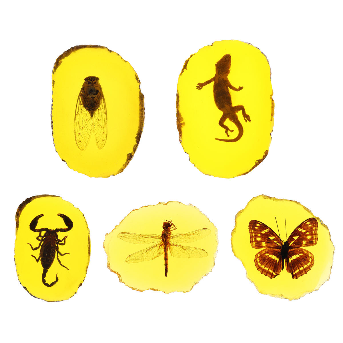 Amber Fossil Insects Dragonfly Manual Polishing Insect Specimen Pendant Craft Decorations