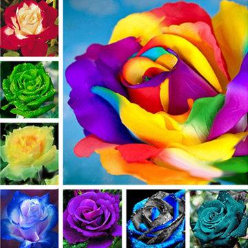 Egrow 100 Pcs Colorful Rare Rose Seeds Garden DIY Flower Bonsai Perennial Plants Seed