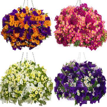 Egrow 100 Adet / Çanta Petunya Tohumlar Petunya Bitkiler Asılı Bonsai Mini Petunya Güzel Çiçek Tohumlar Ev Bahçe için Bonsai Pot Dikim Çiçek Tohumlar